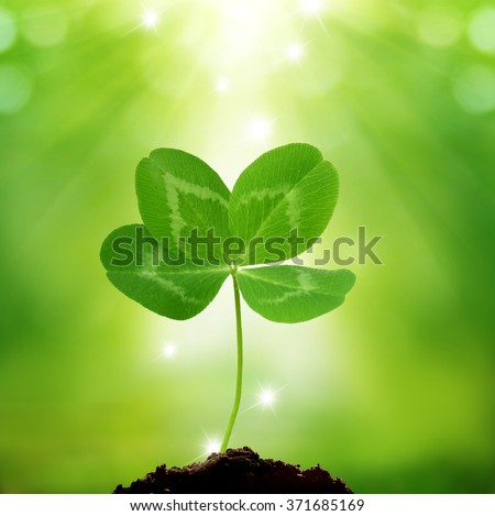 Green background of St. Patricks Day with four leaf clover  - stock photo