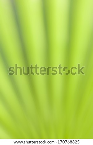 Green background, part of a palm leaf, intentionally out of focus - stock photo