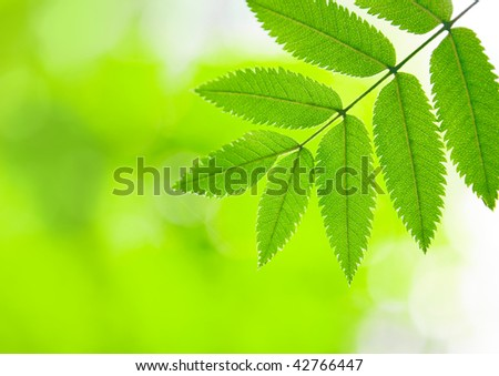 Green background with a summer leaf of a raspberry