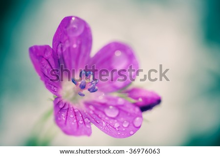 Green background with blossom flower