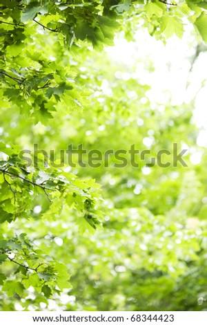 Green background with lush foliage - stock photo
