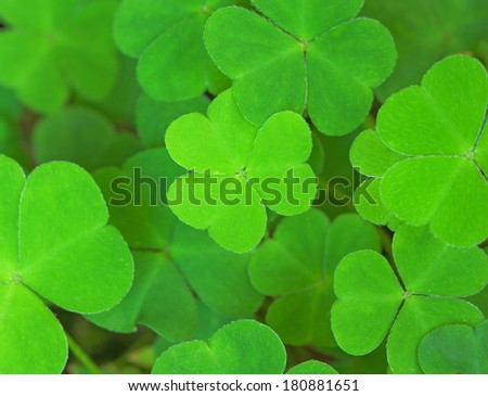 green background with three-leaved shamrocks. St.Patrick's day holiday symbol. Shallow depth of field, focus on central  leaf. - stock photo