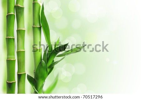 Green bamboo against bokeh background - stock photo