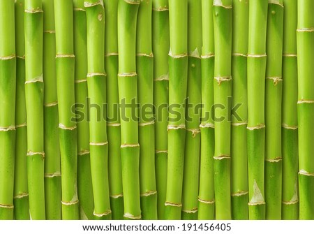 green bamboo background  - stock photo