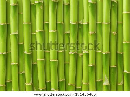 green bamboo background  - stock photo