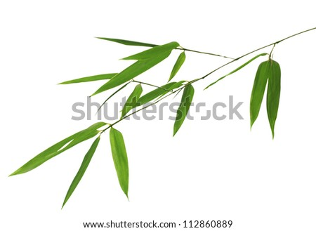 green bamboo branch isolated on white background - stock photo