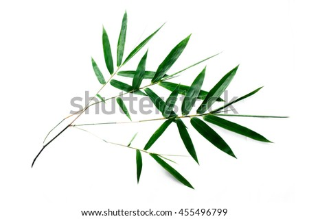 Green bamboo branch isolated on white background.