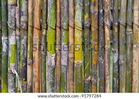 green bamboo fence - stock photo