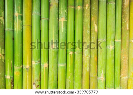 green bamboo fence background - stock photo