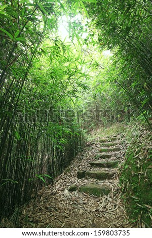 Green Bamboo Forest -- a path leads through a lush bamboo forest - stock photo