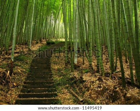Green Bamboo Forest -- a path leads through a lush bamboo forest in Taiwan - stock photo