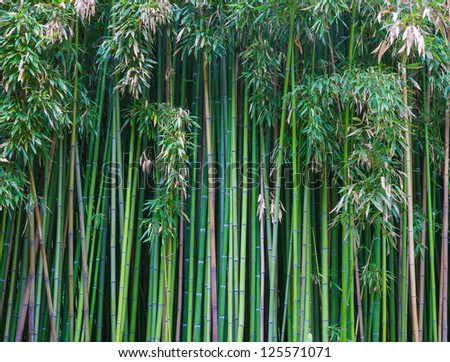 Green bamboo forest. natural background - stock photo