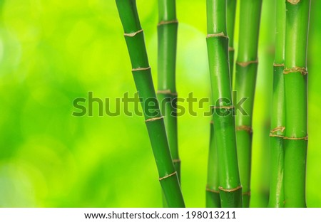 green bamboo isolated on a green background - stock photo