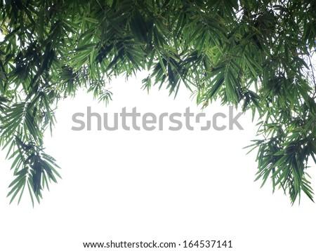 Green Bamboo leaf background - border design  - stock photo