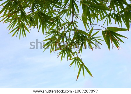 Green bamboo leaves against a sky