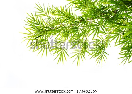 Green bamboo leaves isolate on white background - stock photo