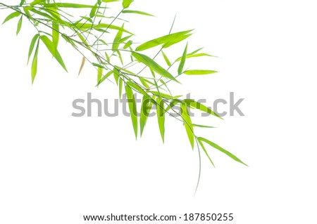 Green bamboo leaves on a white background - stock photo