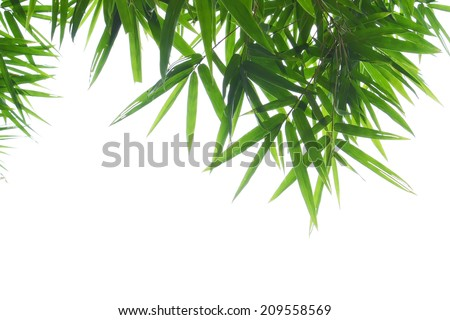 green bamboo leaves on white background - stock photo