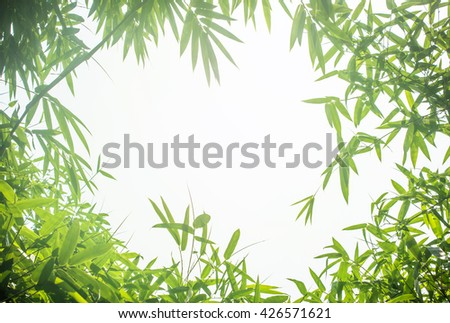Green bamboo leaves or with background .Green Energy. - stock photo