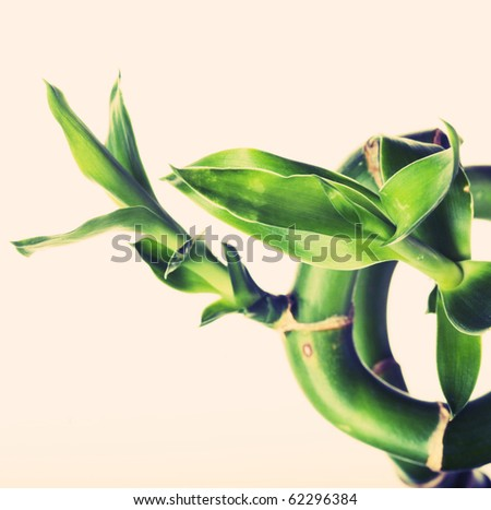 Green bamboo on the white background