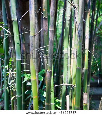 Green bamboo plants growing in a tight cluster in a Hong Kong park