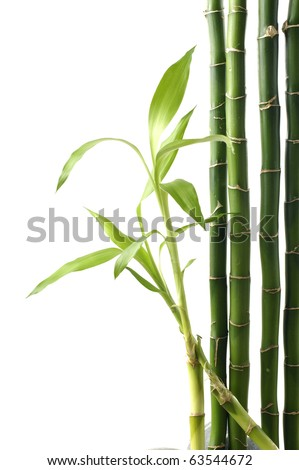 Green bamboo shoots stems isolated