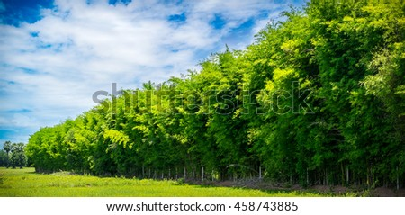 Green bamboo tree and Meadows on blue sky and cloud background
