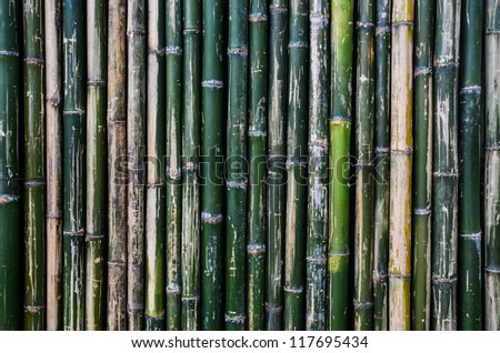 green bamboo wall background