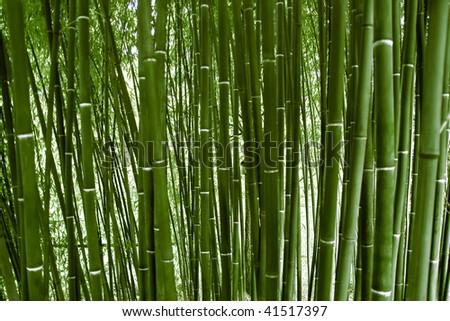 Green bamboo wood - stock photo