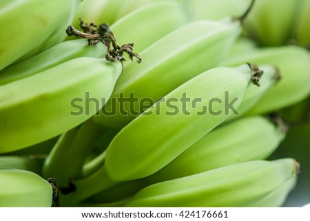 Green banana bunches growing on a tree - stock photo