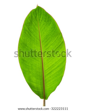 Green banana leaf with red edge isolated on white background