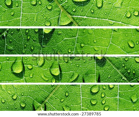 Green Banners of Natural Water Drops - stock photo