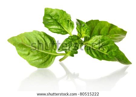 green basil - stock photo