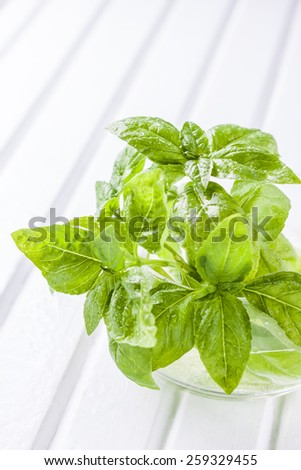 green basil in a glass of water on a white wooden background