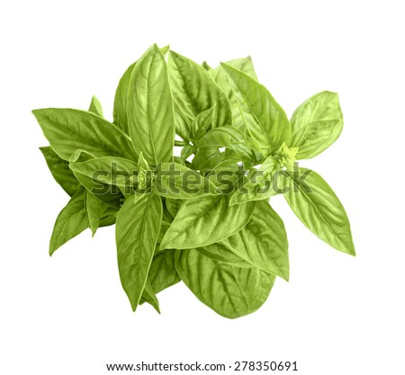 green basil isolate on white - stock photo