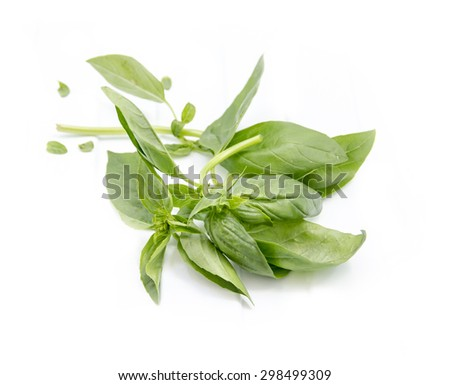 Green basil leaves on a white background