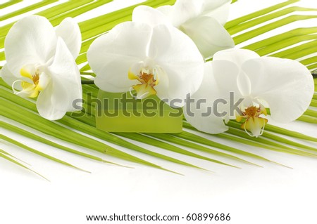 Green bath soap and orchid on Palm leaf - stock photo