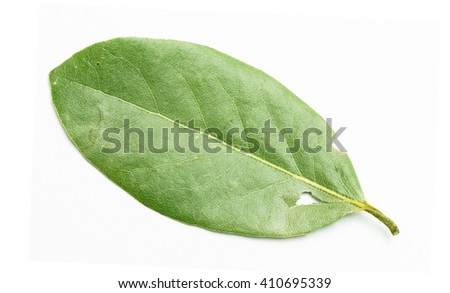 green bay leaf on a white background