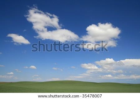 Green bean crops in southern Saskatchewan, Canada. - stock photo