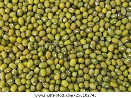 Green bean or mung bean background - stock photo