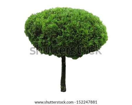 Green beautiful and round tree isolated on white background