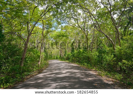 Green beech alley on a sunny day - stock photo