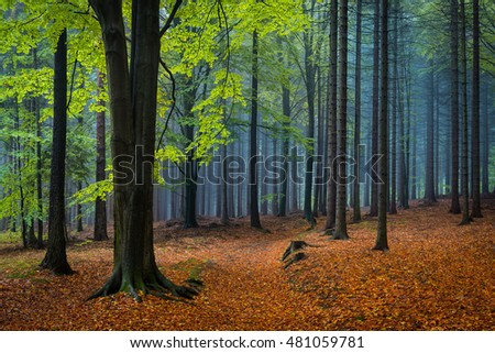 Green beech tree in the autumnal forest. Autumn colorful mood.