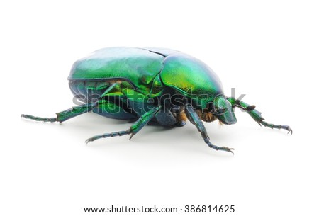 Green beetle insect isolated on white background.