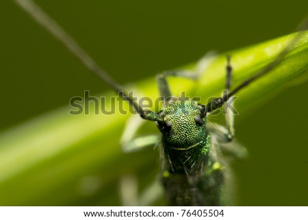 green beetle with long antennas sitting on a plant - stock photo