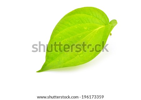 Green betel leaf isolated on the white background.