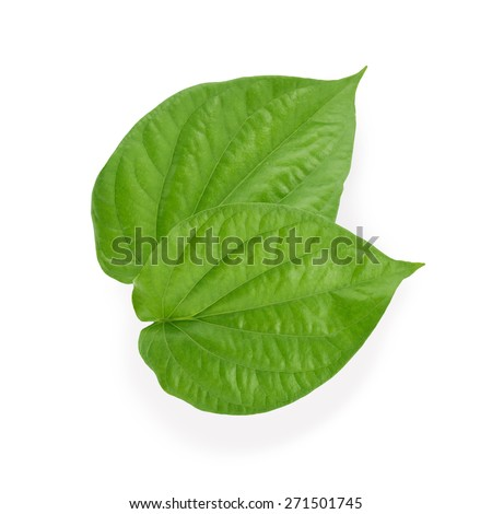 Green betel leaf isolated on the white background. This has clipping path.