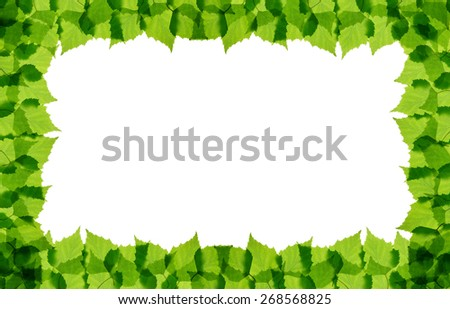 Green birch leaves frame isolated - stock photo