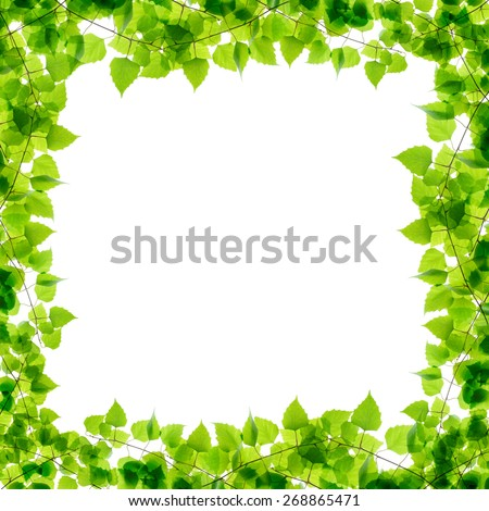 Green birch twigs frame isolated - stock photo