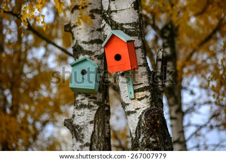 Green bird house nesting-box hang on old birch tree trunk and branches move in wind